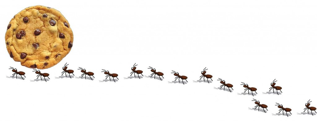 ant photo 1